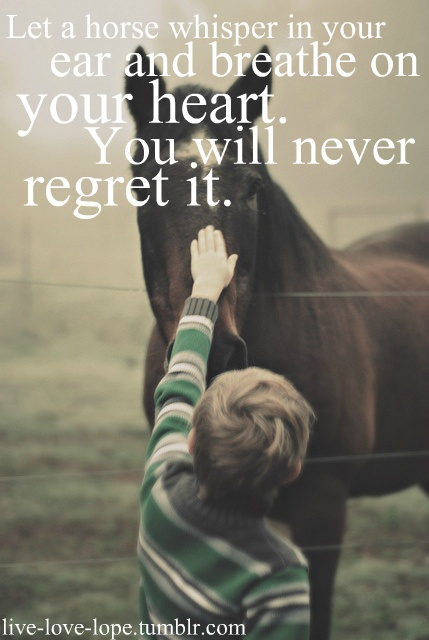 Simple Horse Quotes Quotesgram